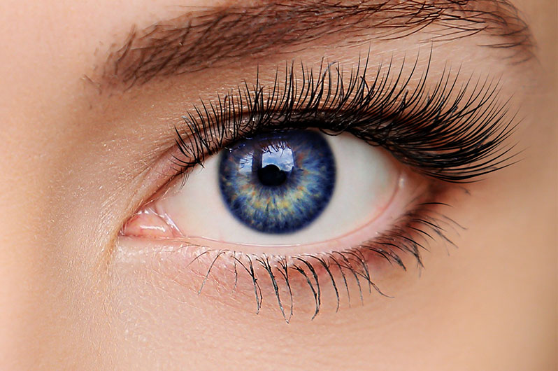 Expo Beauty Institute  Eyelash Tinting Services